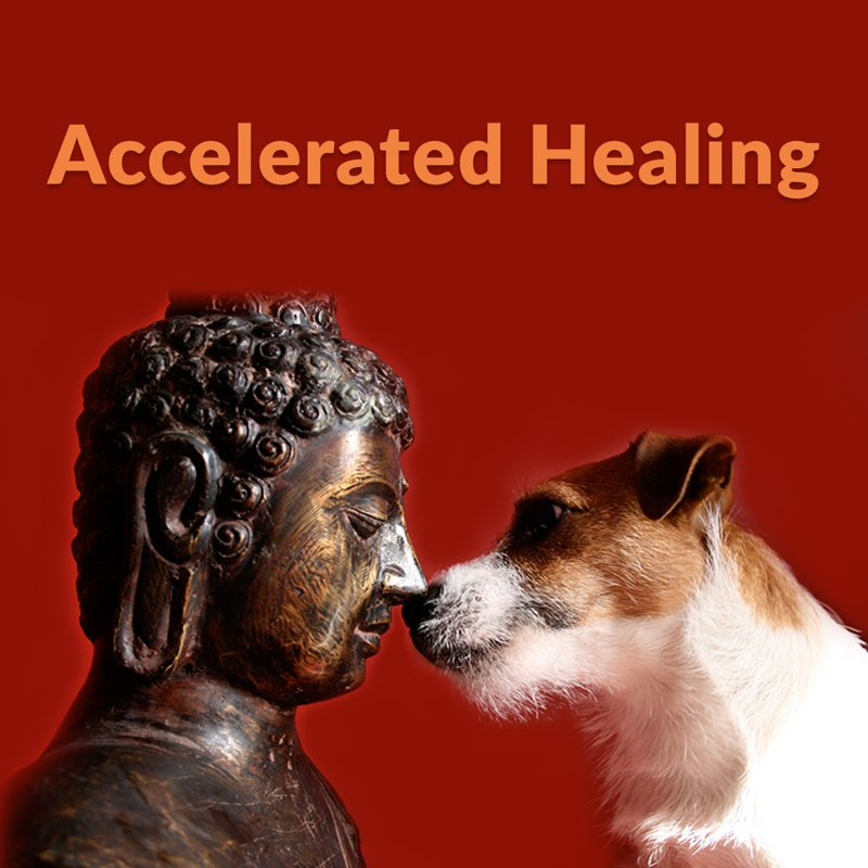 accelerated-healing-thumb