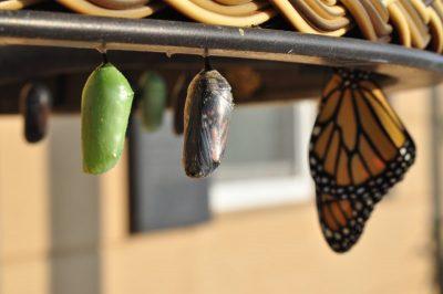 Self-Realization Butterfly Cocoon